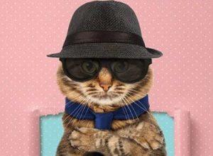 My Boss is a Cat 300x220 - Мой босс - Кот! ✸ 2021 ✸ Тайвань